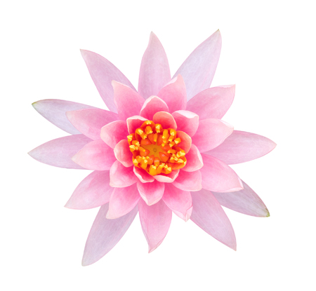 Light pink color lotus flower top view isolated on white background light pink color lotus flower top view isolated on white background clipping path included stock mightylinksfo