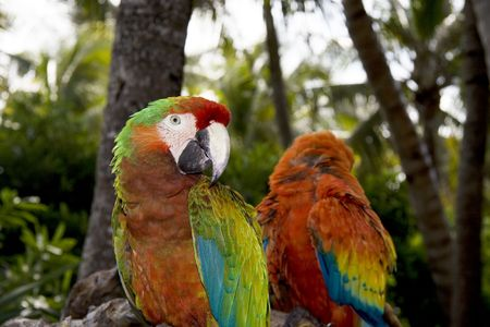 the two parrots: Two parrots from Mexico in the jungle Stock Photo