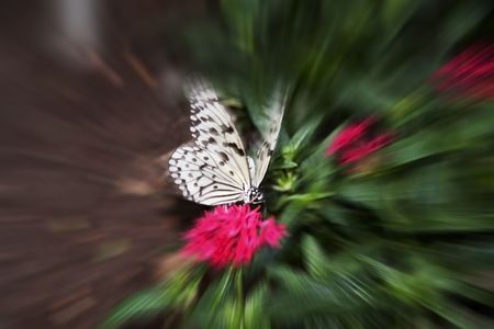 Butterfly sitting on a flower with a zoom effect