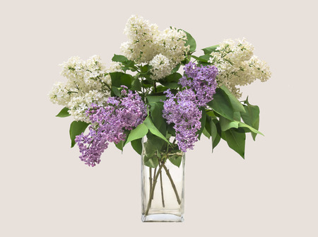 Lilac bouquet in a clear glass vase on a white background