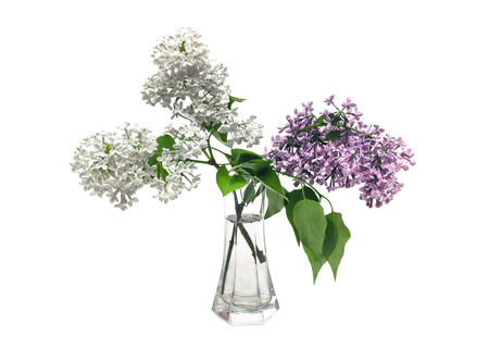 Lilac bouquet in a clear glass vase
