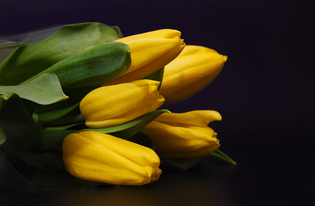 Bouquet of yellow tulips on a black background Фото со стока
