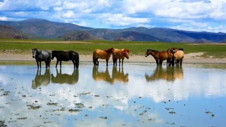 広大な草原立っている水では、モンゴルのモンゴル馬 写真素材