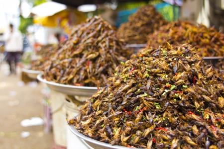 langosta: error notorio comer de asia Foto de archivo