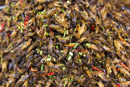 notorious: notorious bug eating of asia Stock Photo