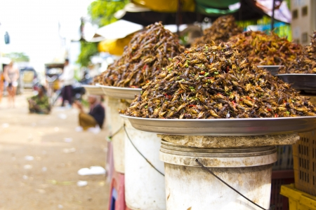 penh: notorious bug eating of asia Stock Photo