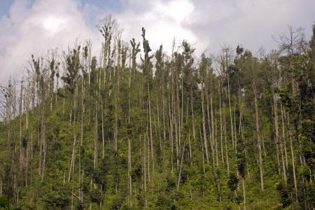 jogjakarta: mount merapi volcano in indonesia, 1 year later the eruption