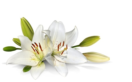 Easter Lily flowers on white background photo