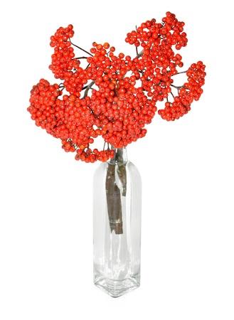 花瓶の赤いナナカマドの果実