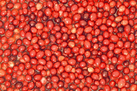 superfruit: Background of ripe raw cranberries floating in water
