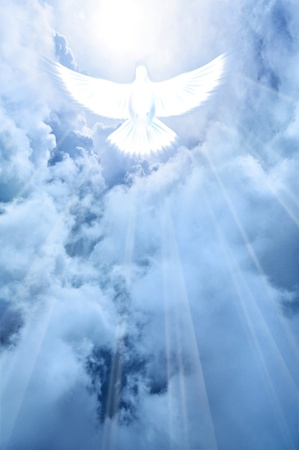 hope symbol of light: White dove descending from the sky