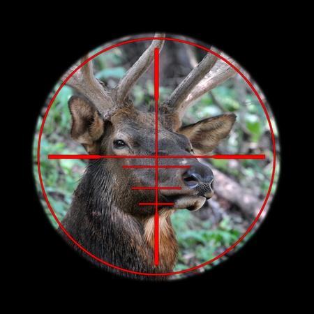 cazador: Gran alce ciervo en su alcance rifle de caza