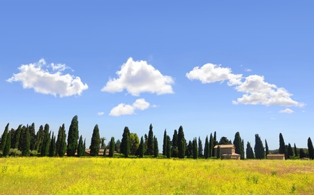 Tuscan landscape with yellow rapeseed and rows of cypress trees photo