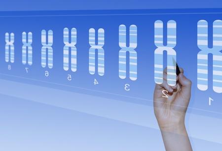 cromosoma: Cromosoma la investigación biomédica para el análisis de anomalías genéticas