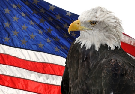 American flag and Bald Eagle, symbols of freedom and democracy photo