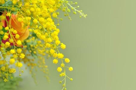 Yellow mimosa, the symbol of International Women s Day