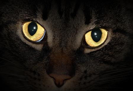 Cat eyes glowing in the dark photo