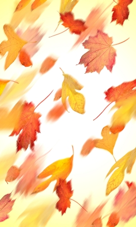 Autumn leaves falling in motion