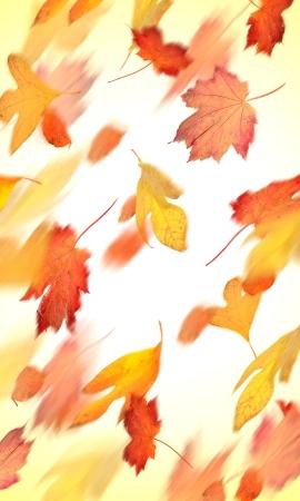 hojas secas: Hojas de oto�o cayendo en movimiento Foto de archivo