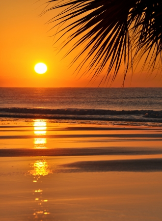 Beautiful paradise beach sunset and palm leaf photo