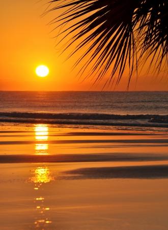 Beautiful paradise beach sunset and palm leaf