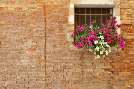 Pink and white petunia flowers hanging from the windowsill of a brick Italian home photo