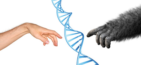 Genetic common ancestry concept for evolution of primates Stock Photo - 29469083