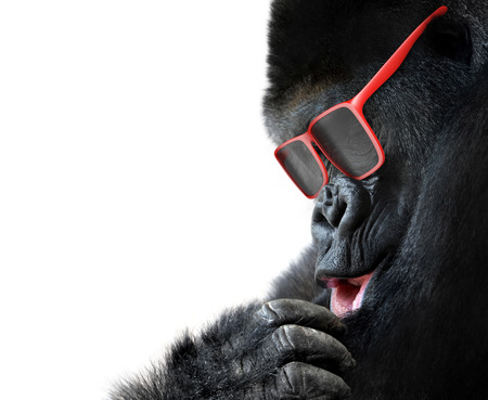 Unusual animal fashion; closeup of gorilla face with red sunglasses photo