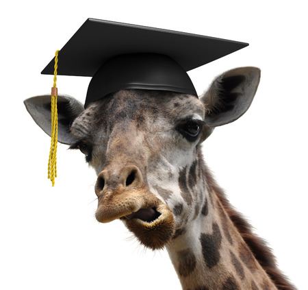 Unusual animal portrait of a goofy giraffe college graduate student