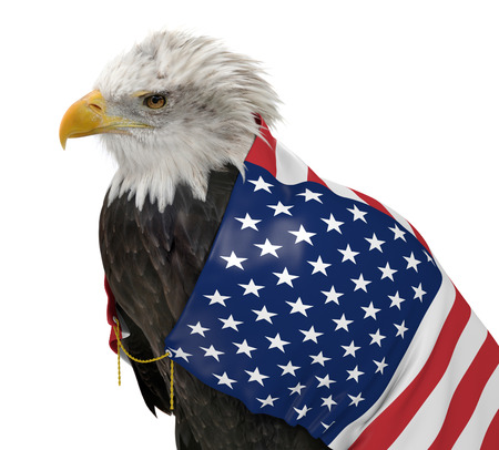 constitution: American bald eagle wearing the United States country flag