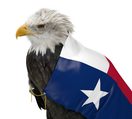 texas state flag: American bald eagle wearing the Texas state flag Stock Photo