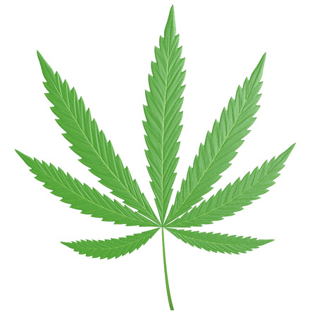 3D cannabis leaf, or marijuana, with the common seven leaflets