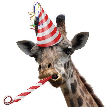 cute giraffe: Funny giraffe party animal making a silly face and blowing a noisemaker Stock Photo