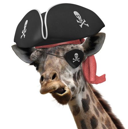 pirata: Foto animal divertido de una jirafa fresca con un sombrero de pirata y la bandera pirata con parche en el ojo