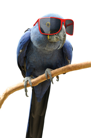 Funny hipster parrot wearing cool red sunglasses photo