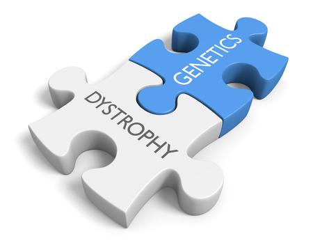 Link between genetics and various dystrophy disorders