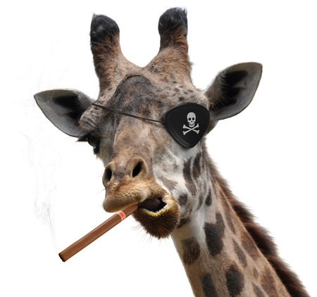 animal eye: Awesome giraffe with a pirate eyepatch and a big cigar