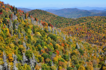 great smokies: Fall colors in the Appalachian Mountains during autumn at the Blue Ridge Parkway East Fork Overlook