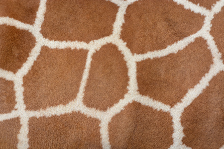 animal fur: Animal skin background of the patterned fur texture on an African giraffe Stock Photo