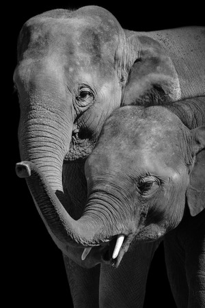 Family bond between a mother and baby elephant Stockfoto