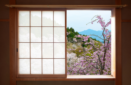 Wooden Japanese sliding window and beautiful weeping cherry tree outside 스톡 콘텐츠