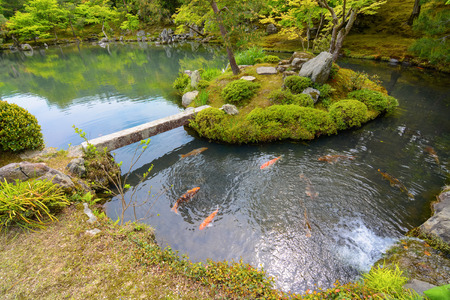 Traditional Japanese pond garden with colorful orange carp fish Stock Photo