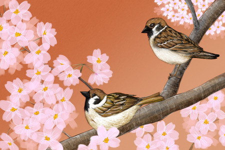 Hand drawn illustration of Eurasian tree sparrows sitting among Japanese Yoshino cherry flowers