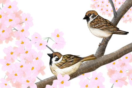 two animals: Original artwork of Eurasian tree sparrows and beautiful pink cherry blossoms