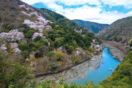 Spring cherry trees flowering along the Katsura River mountainside in Kyoto, Japan