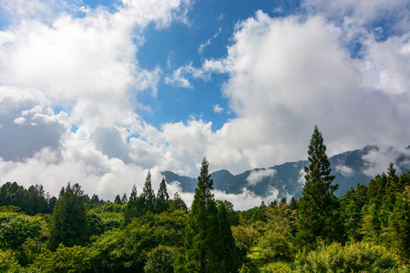 billowing: High altitude forest and billowing clouds at Alishan National Forest in Chiayi District, Taiwan