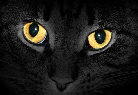Gele kat ogen gloeien in het donker, zwart-wit foto met selectieve kleur
