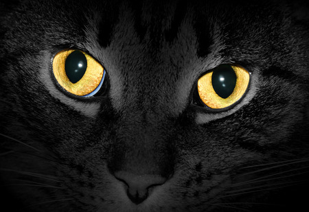 Yellow cat eyes glowing in dark, black and white photo with selective color