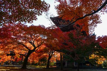 Fiery red autumn maples and a traditional Japanese pagoda in Kyoto, Japan