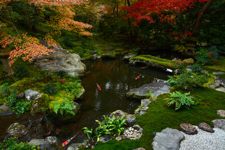 Peaceful Japanese fish pond in autumn with beautiful maples showing their fall colors Stock Photo